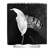 Butterfly On Peace Lilly Shower Curtain