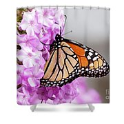 Butterfly On Phlox Flowers Shower Curtain