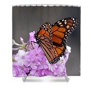 Butterfly On Phlox Shower Curtain