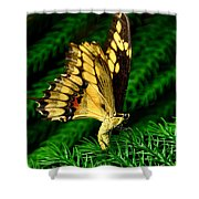Butterfly On Pine Shower Curtain
