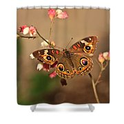Butterfly On Pink Shower Curtain