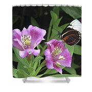 Butterfly On Pink Lillies Shower Curtain