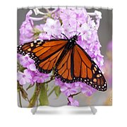 Butterfly On Pink Phlox Shower Curtain
