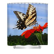Butterfly On Red Daisy Shower Curtain