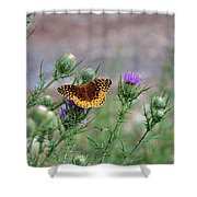 Butterfly On Thistle Shower Curtain