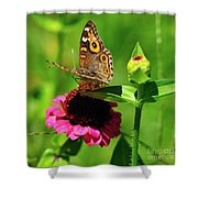 Butterfly On Zinnia Flower 2 Shower Curtain
