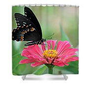 Butterfly On Zinnia Shower Curtain