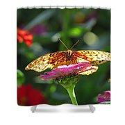 Fritillary Butterfly On Zinnia Shower Curtain