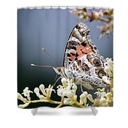 Butterfly - Painted Lady - Tasty Out Here Shower Curtain