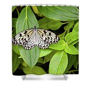 Butterfly Perching On Leaf In A Garden Shower Curtain