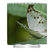 Butterfly Ready For Take Off Shower Curtain