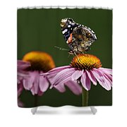 Butterfly Red Admiral On Echinacea Shower Curtain