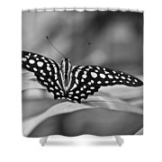Butterfly Resting Shower Curtain