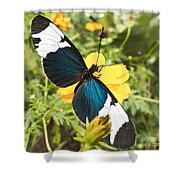 Butterfly Sara Longwing Shower Curtain