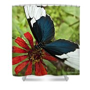 Butterfly Sara Longwing II Shower Curtain