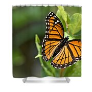 Butterfly Scene Shower Curtain