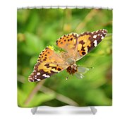 Butterfly Series 2 Of 5 Shower Curtain