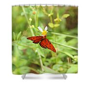 Butterfly Series 3 Of 5 Shower Curtain