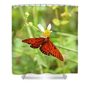 Butterfly Series 4 Of 5 Shower Curtain