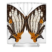 Butterfly Species Cyrestis Lutea Martini Shower Curtain