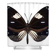 Butterfly Species Euploea Radamanthus Common Name Magpie Crow Shower Curtain