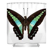 Butterfly Species Graphium Sarpedon Shower Curtain