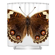 Butterfly Species Junonia Orithya  Shower Curtain