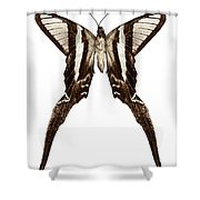 Butterfly Species Lamproptera Curius  Shower Curtain