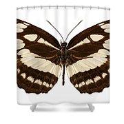 Butterfly Species Neptis Hylas  Shower Curtain