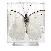 Butterfly Species Pieris Rapae Shower Curtain