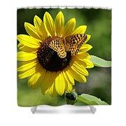 Butterfly Sunflower Shower Curtain