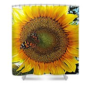 Butterfly Sunflower Shower Curtain