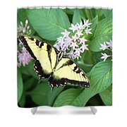 Butterfly - Swallowtail Shower Curtain