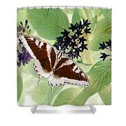 Butterfly - Swallowtail - Photopower 140 Shower Curtain