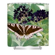 Butterfly - Swallowtail - Photopower 141 Shower Curtain