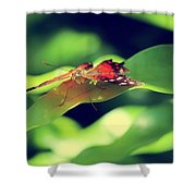 Butterfly Taking The High Ground Shower Curtain