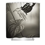 Butterfly Warm Black And White Shower Curtain