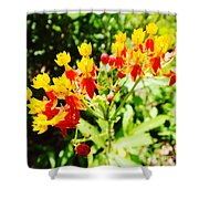 Butterfly Weed 2 Shower Curtain