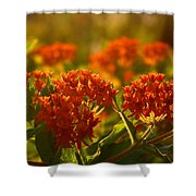 Butterfly Weed In The Sunset Shower Curtain