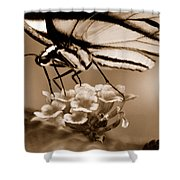 Butterfly Whisper Shower Curtain