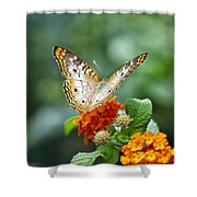 Butterfly Wings Of Sun 2 Shower Curtain by Thomas Woolworth