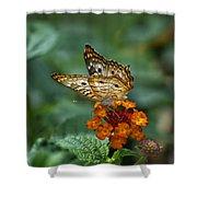 Butterfly Wings Of Sun Light Shower Curtain