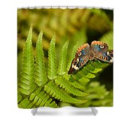Butterfly With Eyes  Shower Curtain