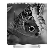 Butterfly5 Shower Curtain