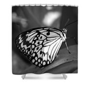 Butterfly7 Shower Curtain