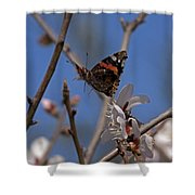 Butterfy In Almond Blossoms   #9289 Shower Curtain