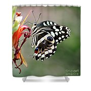 Butterly Shower Curtain