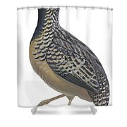 Button Quail Shower Curtain by Anonymous