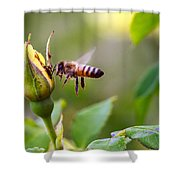 Buzz The Bee Shower Curtain
