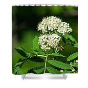 Buzzing Bee Shower Curtain